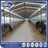 De economische Koeien die van het Frame van het Staal het Huis van de Loods van het Landbouwbedrijf voeden