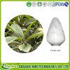 Extrait de feuille de romarin / loquat poudre d'acide ursolique