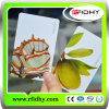 Cartão do PVC/melhor cartão do PVC Card/ID da venda