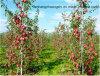 Garten-Stange-beständiges UVfiberglas Pole/Rod-Pflanzenschule-Stange