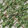 옥외 인공적인 프라이버시는 담쟁이 담 인공적인 잎을 산울타리로 두른다