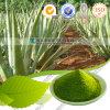 Fabrik-Zubehör-Nahrungsmittelgrad-reines Aloevera-Puder 1% Aloin
