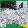 Hidróxido de calcio de la pureza elevada