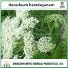 薬効がある原料の粉のアンゼリカPubescentis/HeracleumのHemsleyanumのエキスの5:1、10:1
