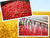 中国のネイティブ健康の減量の食糧赤Goji