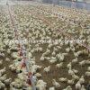 Equipamento de cultivo automático das aves domésticas do jogo cheio da venda quente