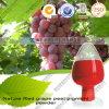 Polvere E20 del pigmento della buccia dell'uva rossa della natura