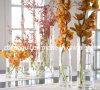 Vaso di vetro rotondo libero (SG-CV100818, CV100615)