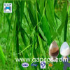 Salicin 15%-98% kein Nebenwirkung-weiße Weide-Barke-Auszug