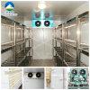 VegetablesのためのScale大きいCold貯蔵室