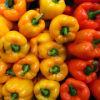 Spanischer Pfeffer, Kohl, Karotte, Patatoes, Knoblauch, Tamatoes, Brokkoli, Zwiebel