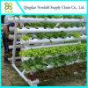 Hydroponik-System für Bauernhof beenden