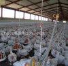Geflügel-Bratrost-Produktions-Gerät