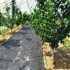 Tissu d'horizontal/tissu tissé par Fabric/Groundcover de lutte contre les mauvaises herbes Barrière de Weed