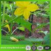 Réseau s'élevant de support de réseau de concombre/haricot/melon pour la centrale