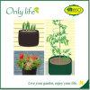 Le tissu de PE d'Onlylife tous les légumes de Rcofriendly de taille élèvent le sac
