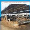 Os compartimentos do gado das tendas da fábrica separam tendas da vaca