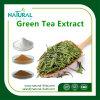 Groen Polyphenol 50%-98% van het Uittreksel van de Thee Poeder