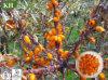 Масло семени Softgel крушины моря Kingherbs портивораковый