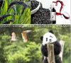 Oberseite EU-organischer schwarzer Reis-Wein, reiches Anthocyanin, Aminosäuren, krebsbekämpfend, Strahlungs-Widerstand, Antiaging, Blut-Stärkungsmittel, Verhinderung-ischämischer Anfall