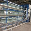 H automático Type 3 Tiers Pulletchicken Cage para la granja avícola