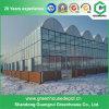 Парник Polytunnel PE овощей тоннеля земледелия для сбывания