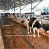 Sistema di rimozione del concime del pollame della Siemens per la mucca