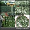 屋外の壁の人工的な緑の葉の塀の両掛け