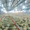 Buveurs automatiques de l'eau de ferme avicole pour le poulet