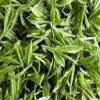 Естественная выдержка L-Theanine зеленого чая высокого качества