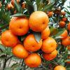肥料の鉄のアミノ酸のキレート化合物