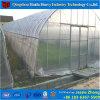 上のWindowsのトマトのための商業プラスチックフィルムの温室Invernadero