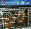 家禽は販売のための小屋装置の卵の鶏のケージを制御する