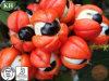 Cafeína natural del extracto el 8% el 10% de Guarana de la alta calidad