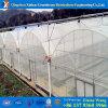 Serre Invernadero van de Plastic Film van lage Kosten de Commerciële voor Tomate