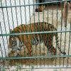 스테인리스 철망사를 가진 안전한 동물원 또는 동물 담