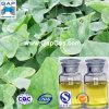 Aceite esencial del Asarum del aceite del Asarum con la muestra libre