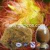 Кукуруза экстракт шелка для снижения кровяного давления