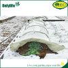 Le blanc d'Onlylife élèvent le tunnel pour des légumes et des fleurs en hiver
