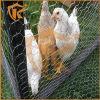Engranzamento de fio sextavado revestido da gaiola de galinha do PVC de China