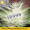 Crecer la MAZORCA de la luz 800 W LED del LED crecen la luz