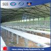 Venta de la jaula de la capa del pollo de la batería de la granja de pollo para las granjas avícolas
