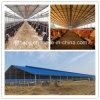 Casa modificada para requisitos particulares de la estructura de acero de la alta calidad para el ganado