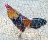La compensation de fil de Hexgaonal pour le PVC de fil de poulet a enduit