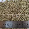 Chicco di caffè verde del Yunnan non arrostito