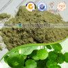 Natürliches Centella asiatica/Kolabaum-Puder des Donner-Gott-Vine/Gotu