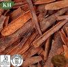 Polyphénols et flavones normaux d'extrait de cannelle
