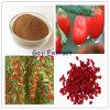 Polvo de la fruta de Wolfberry/polvo del extracto de la fruta de Wolfberry