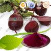Pó natural da raiz da beterraba vermelha de qualidade superior da fonte da fábrica