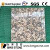 Granit normal de Giallo Fiorito pour des carrelages/vanité/contre- dessus